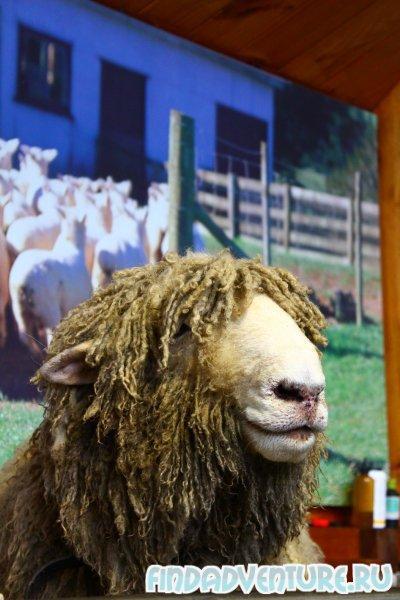 Овцы пять