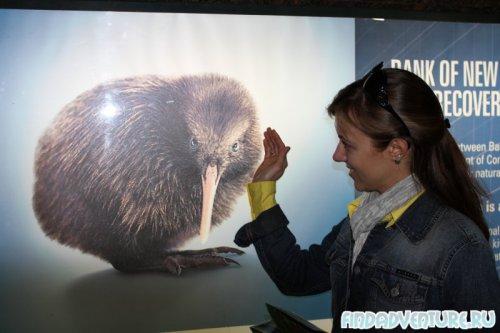 Kiwi pic