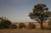 Австралийский пейзаж 3
